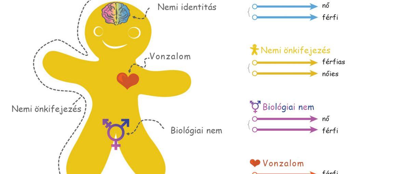 Nemi identitás, biológiai nem, vonzalom